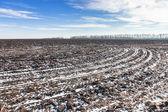 Pole rolnych objętych śniegu — Zdjęcie stockowe