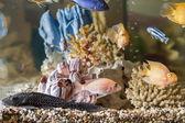 Home aquarium — Stock Photo