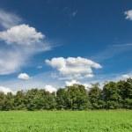 Alfalfa field — Stock Photo #63817133