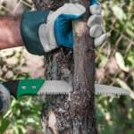 Pruning tree — Stock Photo #65598473