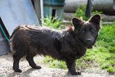 Sad black dog — Stock Photo
