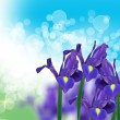 Purple iris flowers — Stock Photo #64634245