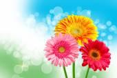 Gerber flower — Stok fotoğraf
