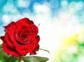Roze bloem — Stockfoto