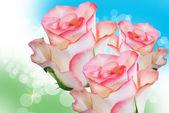 повысился цветок — Стоковое фото