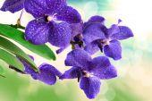 Orkide çiçek — Stok fotoğraf