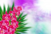 Orchid flower — Stock Photo