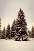Winter forest landscape — Stok fotoğraf