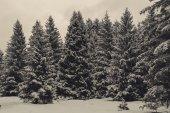 Zimowy krajobraz las — Zdjęcie stockowe