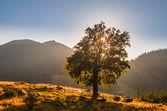 Majestätische berge landschaft mit frischen grünen blätter — Stockfoto