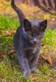 Little kitten playing on the grass roadside in morning — Stock Photo