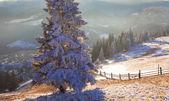 Majestic winter landscape glowing by sunlight.  — Foto de Stock