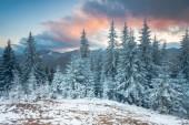 Weihnachten Hintergrund mit verschneiten Tannen — Stockfoto