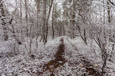Winter forest with trees covered snow — Stock Photo
