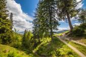 Mountain summer landscape. trees near meadow — Stok fotoğraf