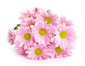Vacker bukett ljust rosa blommor — Stockfoto