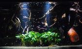 Aquarium fishes — Stock Photo