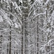 Wintery forest  background — Stock Photo #63723329