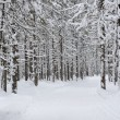 Wintery forest. — Stock Photo #63723371