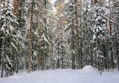 Winter in the wildwood. — Stock Photo