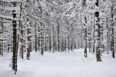 Wintery forest. — Stock Photo