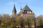 Kaliningrad. Konigsberg cathedral in the fall — Stock Photo