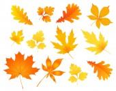 秋の紅葉 — ストックベクタ