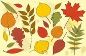 秋の葉ベクター — ストックベクタ
