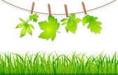 Green leaves with clothespins  — Stock Vector