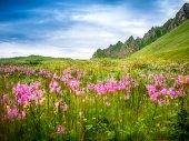 Norway nature — Stock Photo