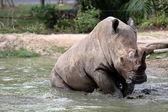 Rhino in the muddy water — Stock Photo