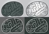 Vector outline illustration of human brain set — Stock Vector