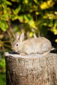 A cute bunny rabbit sitting on a tree stump — Stock Photo