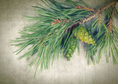 Christmas tree branches on vintage background  — Stock Photo