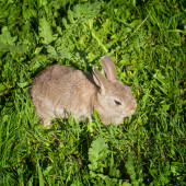 A cute bunny rabbit sitting quietly in the grass — Stock Photo