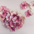 Heart made from pink hydrangea flower petals on vintage fabric b — Stock Photo #68192005