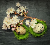 Two small eggs in side tiny green nests with relaxing flowers on — Stock Photo