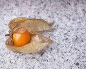 がくを開くにヒメセンナリホウズキの熟した果実を公開 — ストック写真
