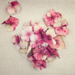 Heart made from pink hydrangea flower petals on vintage fabric b — Stock Photo #68406163