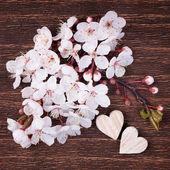 Dvě dřevěné srdce umístěno pěkně s krásný jarní třešeň blo — Stock fotografie