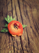 Orange color ranunculus on  old wooden background — Стоковое фото