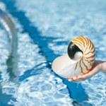 Nautilus seashell in child hands — Stock Photo #54797571
