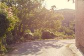 Mountain road through the trees — Foto de Stock
