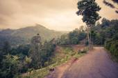Nature landscape in Sri Lanka — Foto Stock