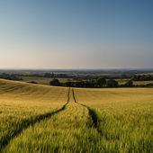 令人惊叹农村景观麦田的夏天日落景色 — 图库照片
