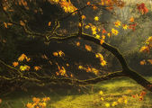 Beautiful golden Autumn leaves with bright backlighting from sun — Stock Photo