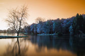 False color lake landscape with calm relfection — Stock fotografie