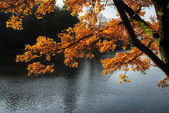 Stunning backlit Autumn golden tree with lake in background — Stock Photo