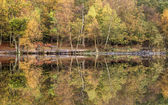 Beautiful vibrant Autumn woodland reflecions in calm lake waters — Stock Photo