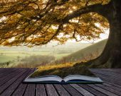 Book concept Stunning Autumn morning sunlight lights landscape t — Stock Photo